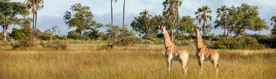 Botswana Safari Banner