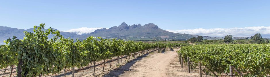 Private Wine Tours Vineyard Mountains