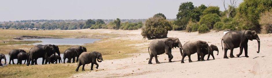 Botswana Explorer Elephants Banner