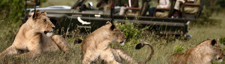 Botswana Explorer Expedition Game Drive top banner