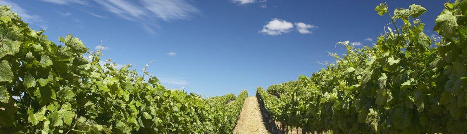Cape Winelands b