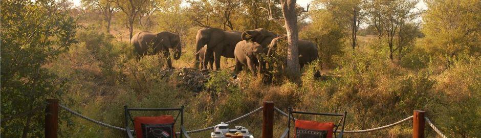 Hoyo Hoyo Safari Lodge Elephants