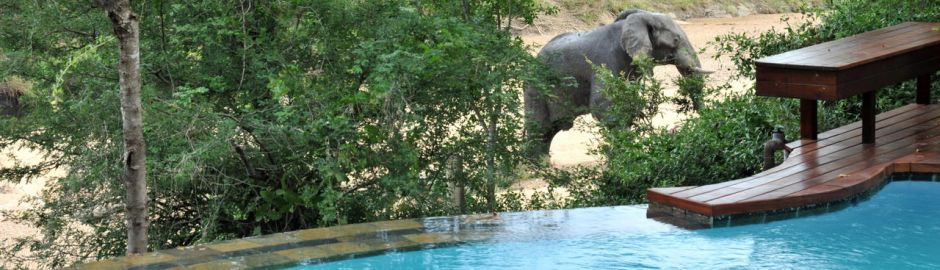 Imbali Safari Lodge Bush Pool View Elephant Sighting baner