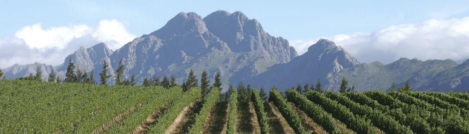 Le Franschhoek Vineyard Banner