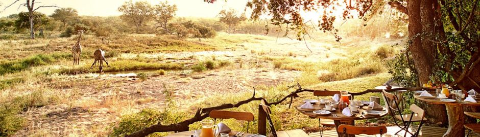 Motswari Safari Lodge Girraffe c