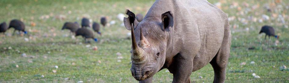 Ongava Lodge Rhino Ac banner