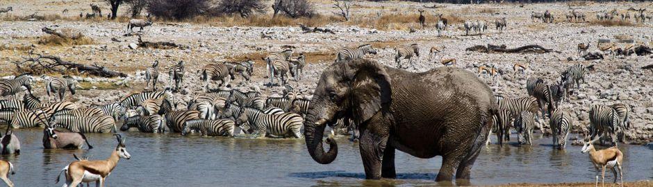 Onguma Tented Camp Etosha Wildlife Banner