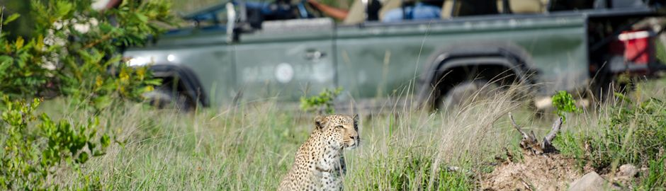 Sabi Sabi Little Bush Camp Game Drive act