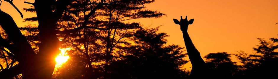 Seba Camp Sunset Girraffe Banner