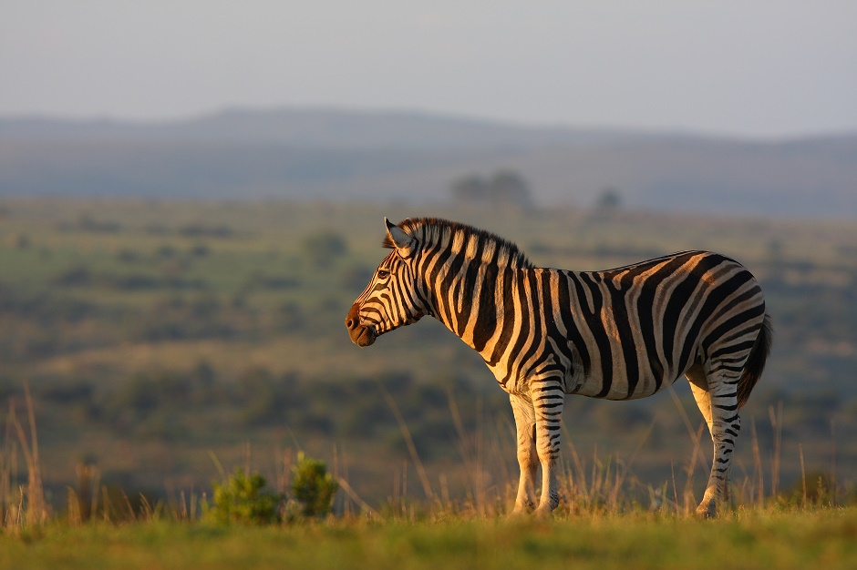 Shamwari Wildlife