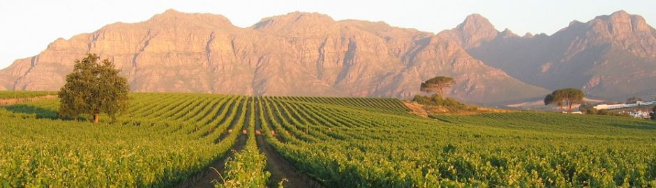 Cape Winelands b