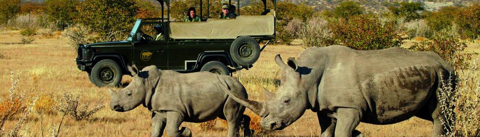 Little Ongava Game Drive Rhino Act Banner