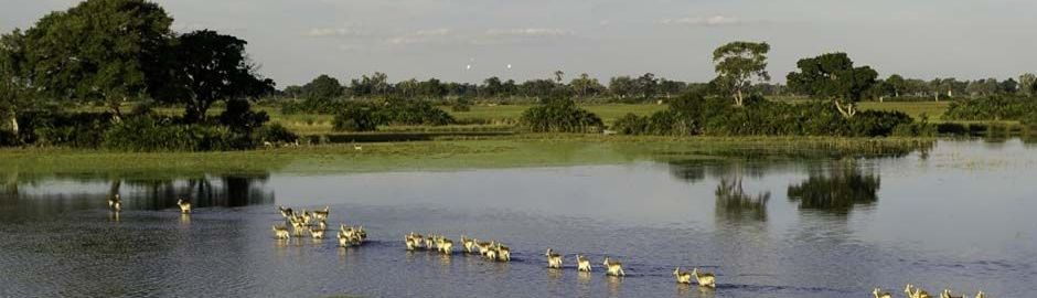 Xaranna Okavango Delta Camp Botswana Game Crossing b