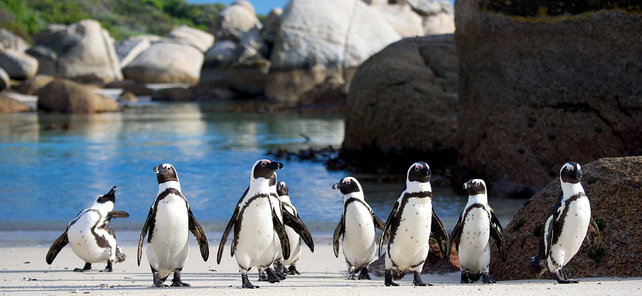 Penguins – Boulders Beach – Simonstown