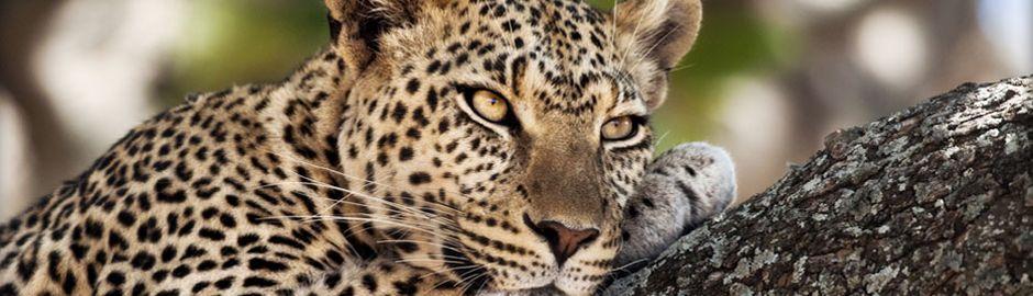 Leopard Mountain Game Lodge b