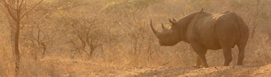 Leopard Mountain Game Lodge rhino b
