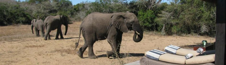 Phinda Private Game Reserve elephant b