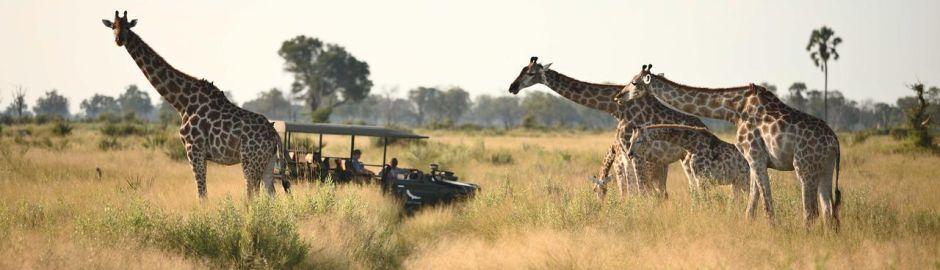 Nxabega Okavango Tented Camp Girrafe b