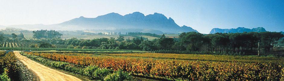 Stellenbosch Banner