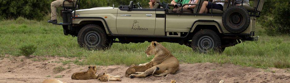 Arathusa Safari Lodge Game Drive Kruger honeymoon