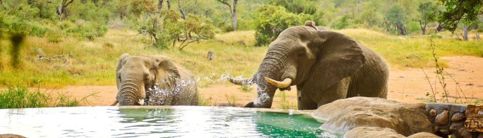 Motswari Safari Lodge Pool Elephants act Cape Town and Kruger honeymoon