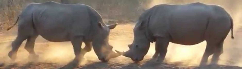 Thula Thula Private Game Reserve Rhinos