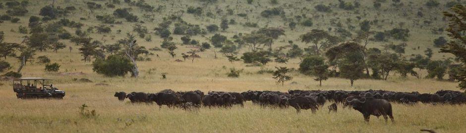 Wildebeest Klein's Camp Serengeti