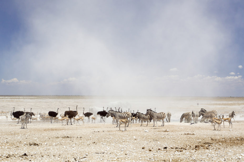 Dust_Cloud_in_Etosha_National_Park