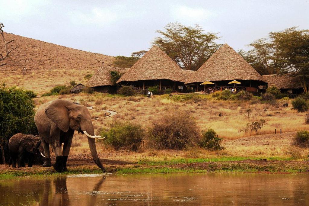 Must-Have Experiences in Kenya