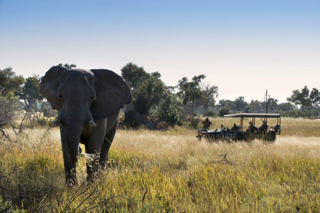 A close elephant encounter on safari